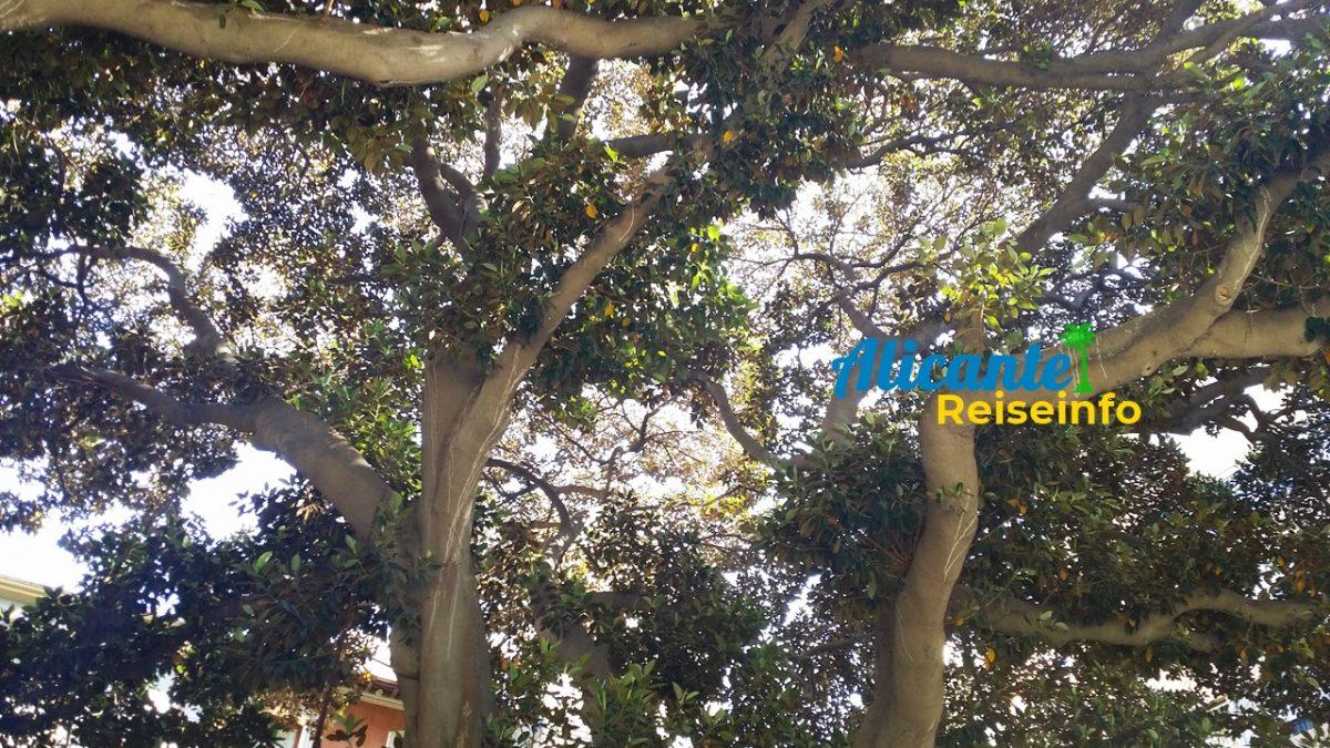 Plätze mit Bäumen – Schatten und Flair beim Spazieren